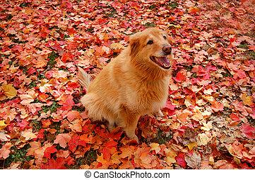 犬, camoflauge