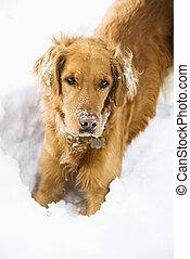 犬, snow.