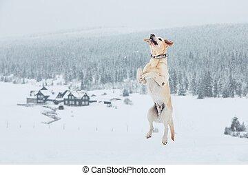 狗, 冬季