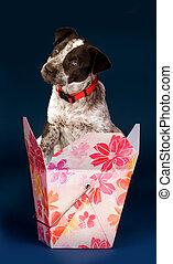 狗, 在, a, box.
