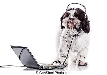 狗, 带, laptop.