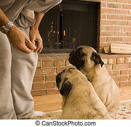 狗, 懇求, 為, 對待