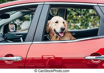狗, 注意, ......的, 車窗