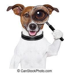狗, 由于, 放大鏡