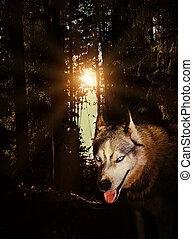 狼, 在, the, 森林, 夜間, 神秘主義者, grunge, 月亮, 神祕