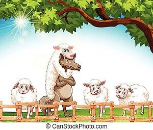 狼, sheeps, グループ