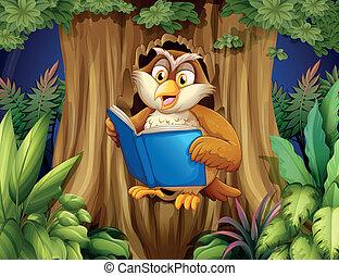猫头鹰, 书, 树, 阅读