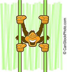 猴子, 卡通, 字