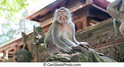 猿, 自然, 心配, 再生, 行動, 霊長類, 連絡, 観光客, 予備, offspring.
