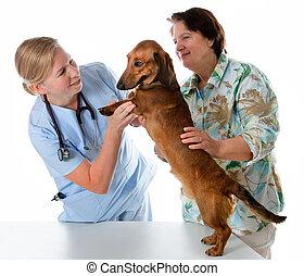 獣医, 医者