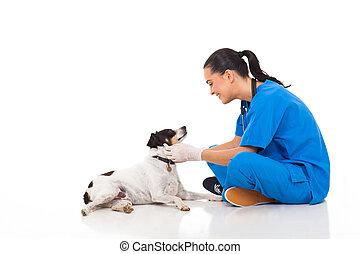 獣医, 医者, ペット, 犬, 専門家, 遊び