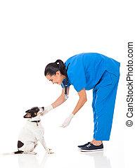 獣医, 医者, 犬, 遊び