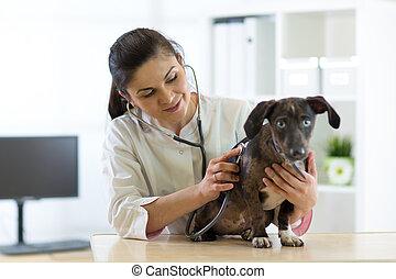 獣医, 救急車, 獣医, 子犬, 医者