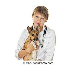 獣医, 犬, 医者
