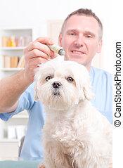 獣医, moxa の処置