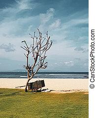 獨輪手車, 在海灘上