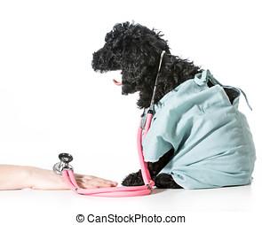 獸醫, 關心