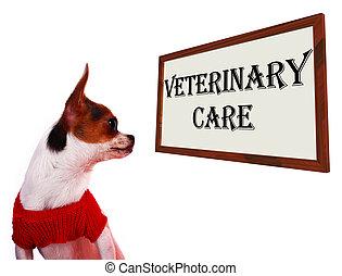 獸醫, 關心, 簽署, 顯示, 寵物, 門診部, 或者, 醫院