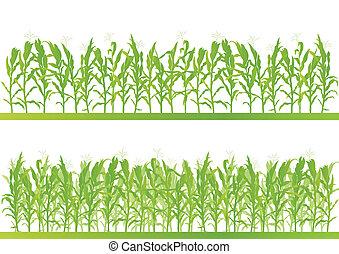玉米领域, 详尽, 乡村, 风景, 描述, 背景, 矢量