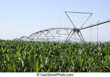 玉米, 灌溉