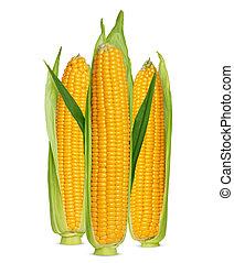 玉米, 耳朵, 被隔离, 白色