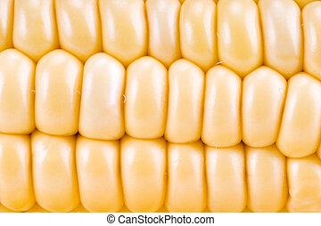 玉米, 背景