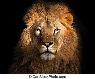 王, ライオン, 黒, 隔離された