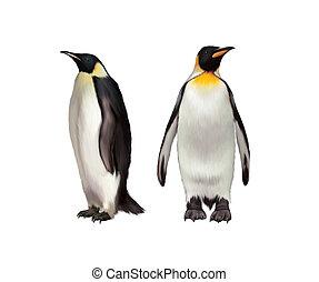 王, 皇帝の ペンギン, gentoo ペンギン