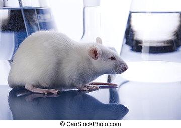 玻璃, 老鼠