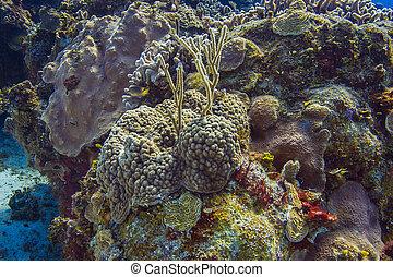 珊瑚礁, 以及, fish