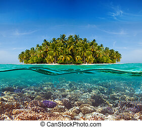 珊瑚礁, 以及, the, 島