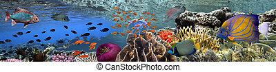 珊瑚礁, 水下, 全景, 由于, 學校, ......的, 鮮艷, 熱帶魚