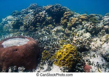 珊瑚礁, 生活, 系統