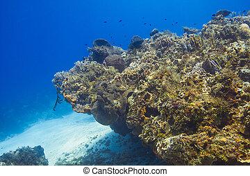 珊瑚礁, 點