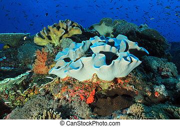 珊瑚礁, bali