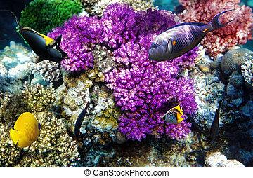 珊瑚, エジプト, sea., アフリカ。, fish, 赤