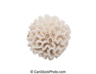 珊瑚, ラウンド, 隔離された