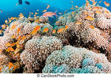 珊瑚, 以及, 魚