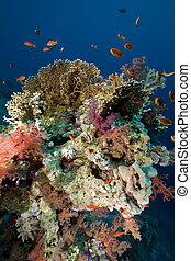 珊瑚, 以及, fish