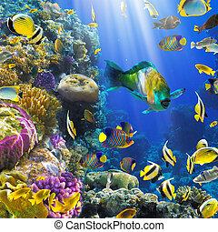 珊瑚, 植民地, fish