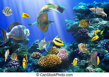 珊瑚, 殖民地, 以及, 珊瑚, fish