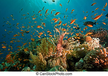 珊瑚, 海洋, 以及, fish