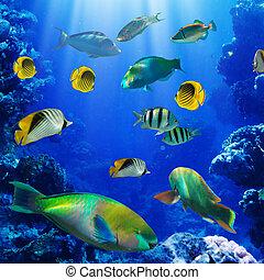 珊瑚, 礁石