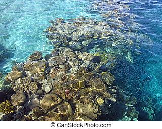 珊瑚, 礁石, 在紅里, 海