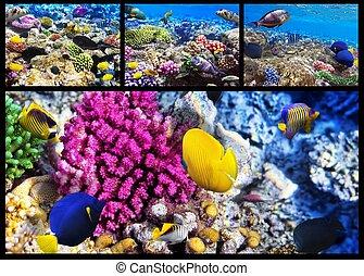 珊瑚, collage., egypt., sea., fish, 赤