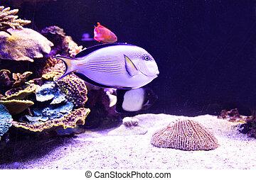 珊瑚, fish