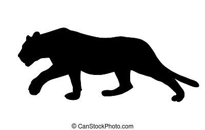 現実的, イラスト, こそこそすること, ∥あるいは∥, ネコ科, ヒョウ, ベクトル, 探求, ライオン