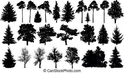 球果を結ぶ, セット, 木, 隔離された, 木, silhouette., forest., バックグラウンド。, 白