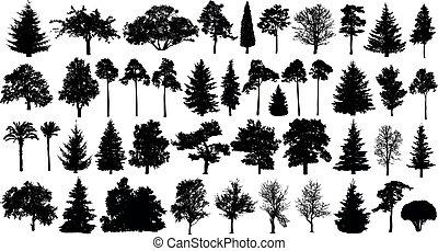 球果を結ぶ, セット, 木, 隔離された, 木, silhouette., forest., 背景, 白