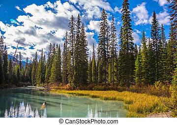 球果を結ぶ, 森林, 湖, 山